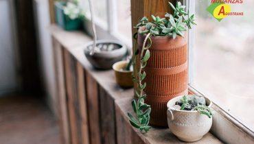 Planta para transportar durante una mudanza.