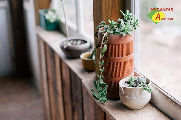 Consejos para trasladar plantas en una mudanza.