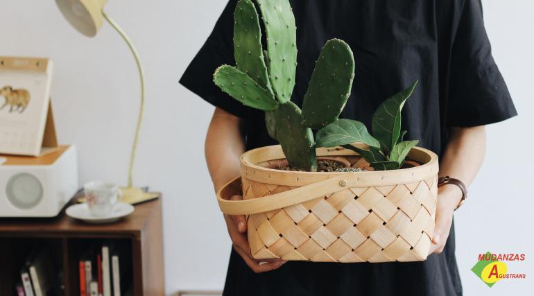 traslado de plantas en una mudanza